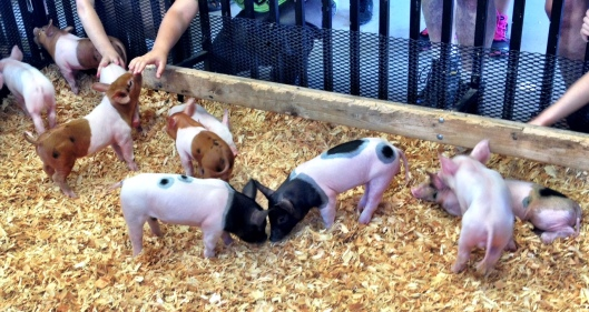 Piglet Palace! Little cute baby pigs running around!