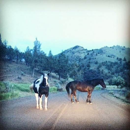 Horses at the Painted Hills