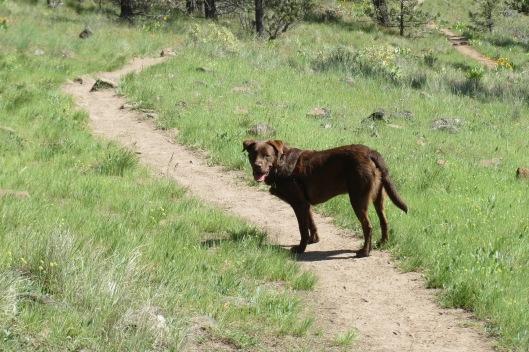 Otto Hiking!